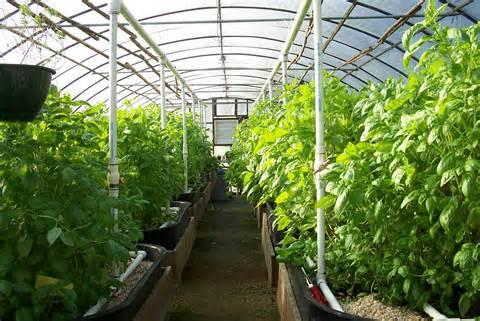 تحقیق درباره طرح احداث گلخانه برای تولید محصولات گلخانه ای